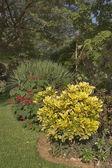 Un floreciente jardín botánico — Foto de Stock