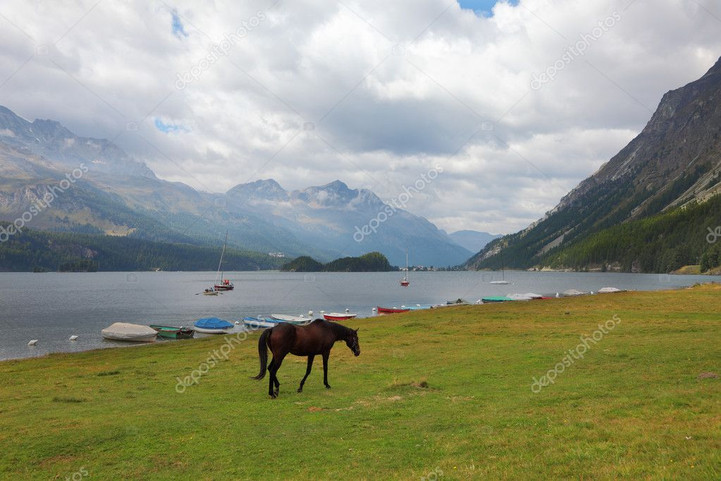 Sleek thoroughbred bay horse grazing near the moored yachts — Stock Photo #8425159