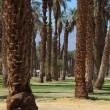 Постер, плакат: Palm avenue in the oasis