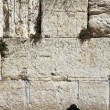 The religious Jew praying at the Western wall of the Jerusalem — Stock Photo