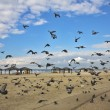 Stock Photo: Quay of Tel Aviv. flight pigeons