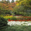 The multi-colour flower bed - Photo