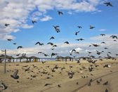Quay of Tel Aviv. The flight pigeons — Stock Photo