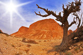 Tree in ancient mountains — Stock Photo