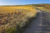 Road through fields — Stockfoto