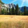 Stockfoto: Dense autumn grass in park in California.