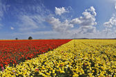 The spring day in fields flowers — Stock Photo
