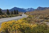 A trip through the colorful autumn desert — Stock Photo