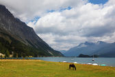 Sleek horse grazing — Stock Photo