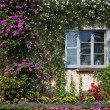 Wall and window, overgrown with flowers — Stock Photo