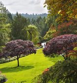 Butchard-garden on island Vancouver in Canada — Foto Stock