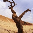 Dry tree of the freakish form — Stock Photo