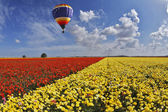 Picturesque multi-coloured balloon — Foto Stock