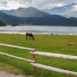 Stock Photo: Rural fence along the lake shore