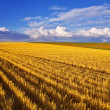 Huge field and small farm — Stock Photo