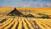 Techo de una granja — Foto de Stock