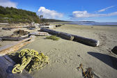 Coast on island Vancouver, logs, seaweed and dry trees — Stock Photo