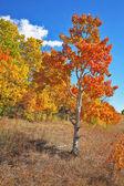 Arbres de l'automne pittoresques avec feuillage jaune — Photo