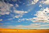 The steppe — Stockfoto