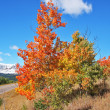 Stock Photo: Mellow autumn. Picturesque autumn trees