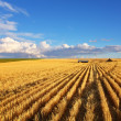 Stock Photo: Fields of Montana