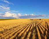The fields of Montana — Stock Photo