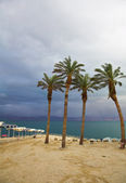 Palm trees and beach canopies in a thunder-storm — Stock Photo
