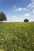 緑の春の開花フィールド — ストック写真