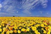 Magnificent spring day in fields flowers — Stock Photo