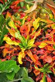 Exotic bright plants — Stock Photo