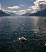 Calore sul lago. — Foto Stock