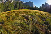 The well-known Yosemite park — Stock Photo