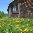 Dandelions near old wooden rural building — Stock Photo