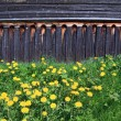 Dandelions near old wooden rural building — Stock Photo #10698599