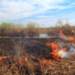 Stock Photo: Red fire on spring field in dry herb