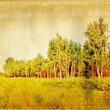 Birch copse on old paper — Stock Photo #8055354