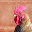 Cock on aging paper background — Stock Photo #8055409