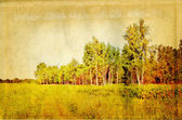 Birch copse on old paper — Stock Photo