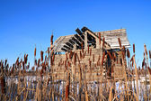 Bulrush near wooden rural building — Stock Photo