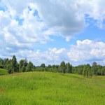 Birch wood near green field — Stock Photo