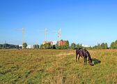 Horse grazes on meadow against new building — Stock Photo