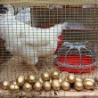 Stock Photo: Hen in hutch on rural market