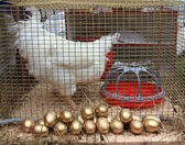 Hen in hutch on rural market — Stock Photo