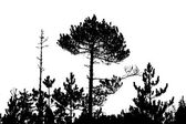 Tree silhouette on white background, vector illustration — Stock Vector
