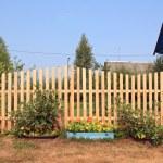 Autumn flowerses near wooden fence — Stock Photo #9582966