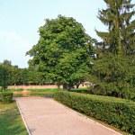 Lane in town park amongst tree — Stock Photo