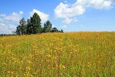 Yellow flowerses on autumn field — Stock Photo