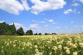White flowerses on summer field — Stock Photo