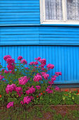 Flowerses near wall of the wooden building — Stock Photo