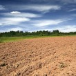 Stock Photo: Plow field